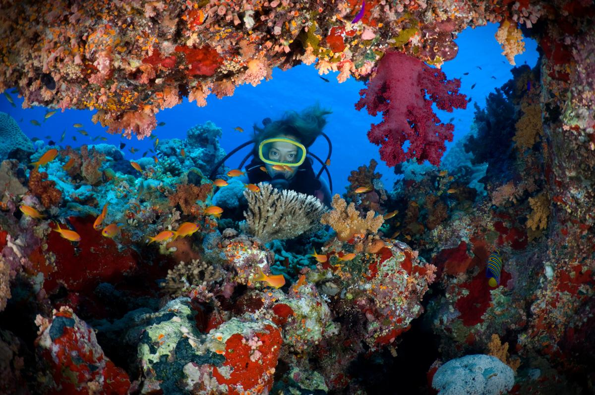 Egypt Red Sea Diving - Urban Papyrus