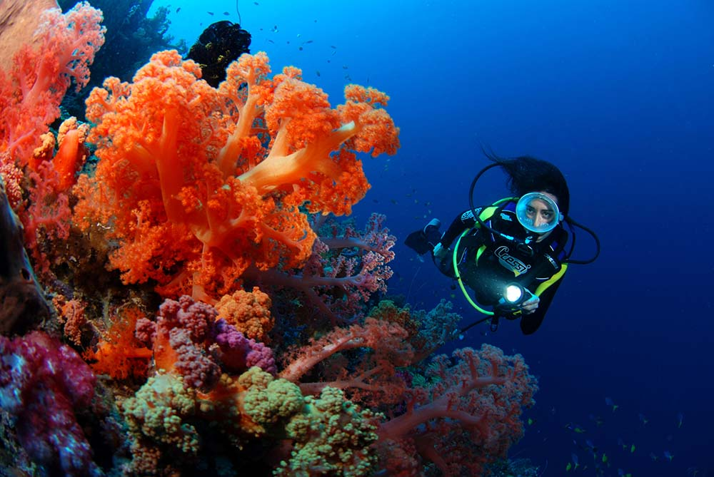 Popular Deep Dive Sites Fiji Islands - Urban Papyrus