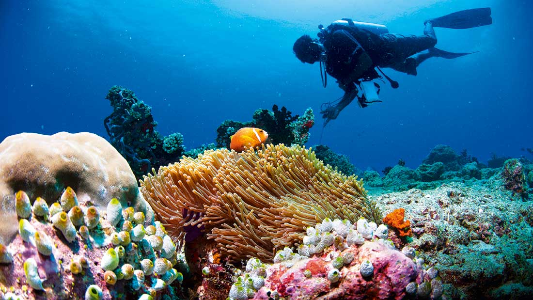 Popular Deep Dive Sites Maldives - Urban Papyrus